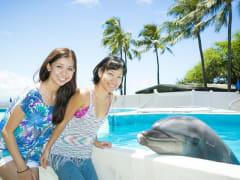 Dolphin_Aloha2