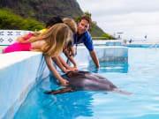 Dolphin_Aloha1