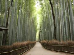 arashiyama_