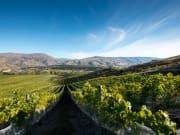 vineyard in central otago queenstown new zealand