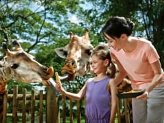 Singapore Zoo, animal interaction. kids