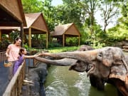 Singapore Zoo, elephants, feeding