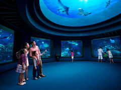 Sentosa_Singapore_SEA_Aquariumtrade_One_Day_Pass