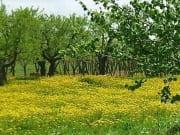 南プーリアの自然