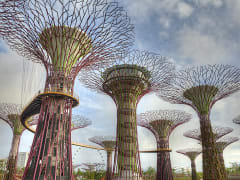 8857_Singapore_Gardens_by_the_Bay_Conservatory