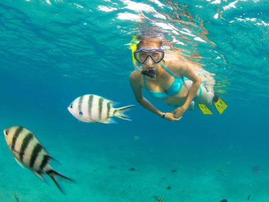 USA_Hawaii_Snorkel_shutterstock_699388009 (1)