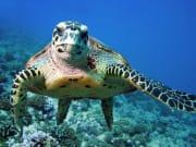 USA_Hawaii_Waikiki_Turtle-Snorkel_shutterstock