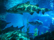 Dive with the sharks of SEA LIFE Bangkok