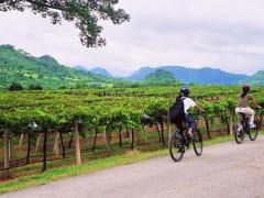 khaoyai_winetrails