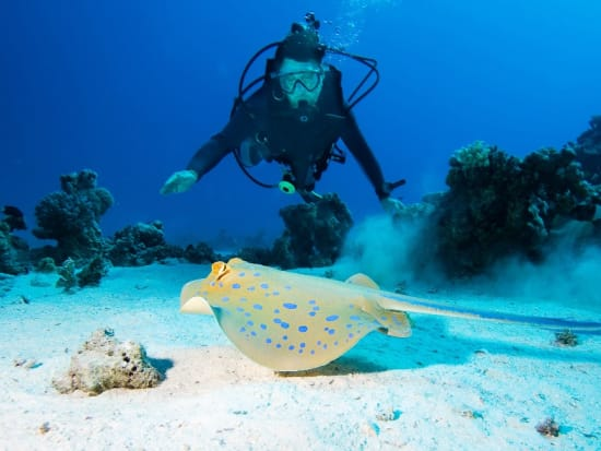 Australia_Cairns_Great_Brrier_Reef_shutterstock_122103769_resized