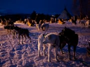 alaskan huskies, sled ride, tromso, norway