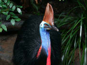 wildlife habitat cassowarry