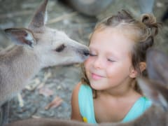 wildlife habitat child interacting with kangaroos