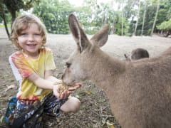 wildlife habitat child hand-feeding a kangaroo