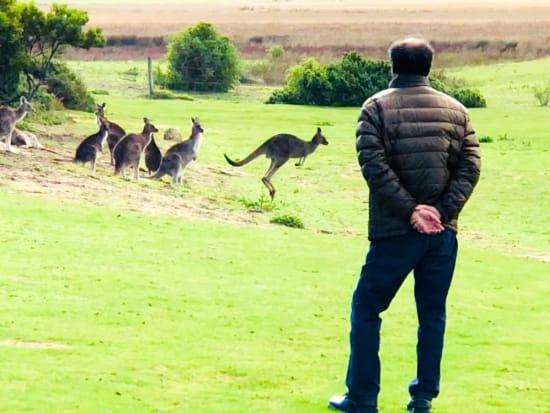 Wild_Kangaroos_2_resized