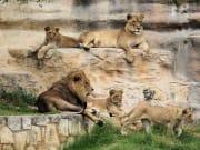 SAT zoo