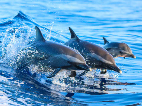 Natural Habitats Or Swim With Pods Of Hawaiian Spinner Dolphins On Oahu S West Coast And Learn All About Dolphin Conservation From Your Expert Guide