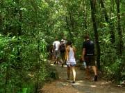 Daintree Wilderness