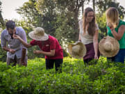 Herb tasting in Siem Reap