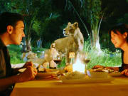 dinner with lions