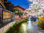 Japan_Kyoto_Gion_District_Shirakawa_River_Spring_Cherry_Blossom_Sakura_Night_shutterstock_245126506