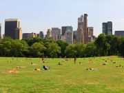 USA_NY_Central Park_shutterstock_14859436