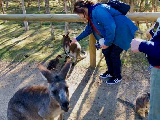 Moonlit_Sanctuary_Wallabies_and_Kangaroo