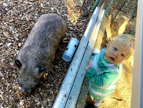Moonlit_Sanctuary_Wombat