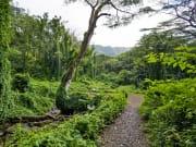 USA_Hawaii_Rainforest_Hike_shutterstock_572643748