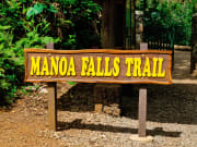 USA_Hawaii_Forest_Hike_shutterstock_636744838