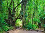 USA_Hawaii_Forest_Hike_shutterstock_1013108197