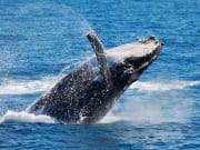 rottnest island whale watching cruise from perth