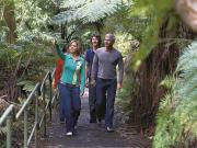 Wildlife - Blueys Bushwalk 2