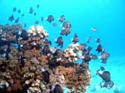 06 サンゴに暮らす魚