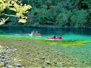 千歳川源流には、天然記念物の水草達が咲き乱れます