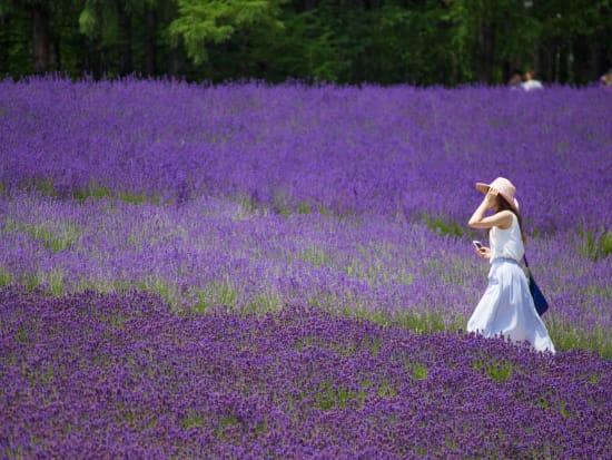 Visit Furano And Biei Lavender Fields From Sapporo Sapporo Area