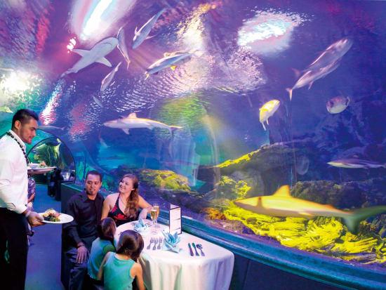 Dinner_Under_the_Sea (1)