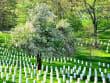 USA_Arlington National Cemetery_near to Washington DC_123RF_19452494_ML