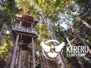 Kereru-Webpage-image