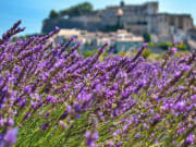 Provence Lavender Tour from Paris TGV (2)
