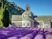 Provence Lavender Tour from Paris TGV (1)