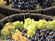 France_Bordeaux_Winery_shutterstock_199082486