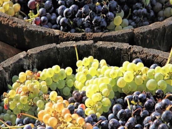 France_Bordeaux_Harvesting_Grapes_Winery_Vineyard_shutterstock_199082486