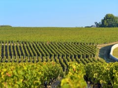 France, Medoc, Bordeaux Vineyard Half-Day Tour