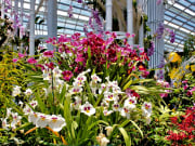 Gardens by the Bay_Orchids_shutterstock_642435124