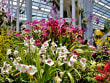 Singapore_Gardens by the Bay_Orchids_shutterstock_642435124