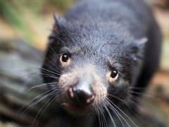 WILD LIFE Sydney Zoo (3)_resized