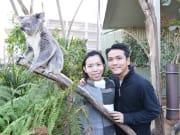 Koala Breakfast at WILD LIFE Sydney Zoo_resized
