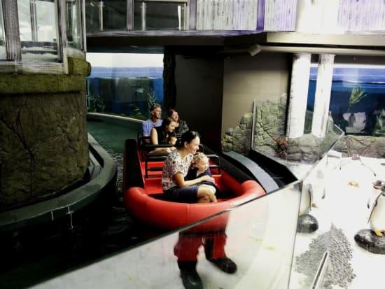 Penguin Expedition Raft Ride at SEA LIFE Sydney Aquarium_resized