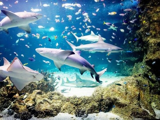 Reef Theathre - SLSA_resized